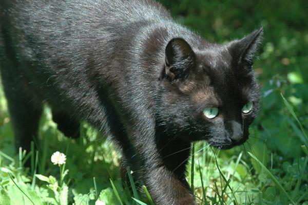 Margo the Wonder Cat